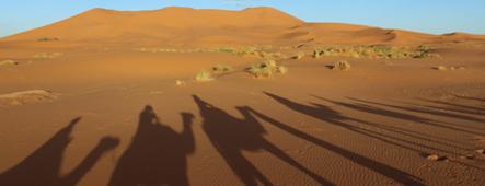 emirate kamelsafari