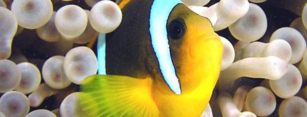 Safaga Unterwasserwelt